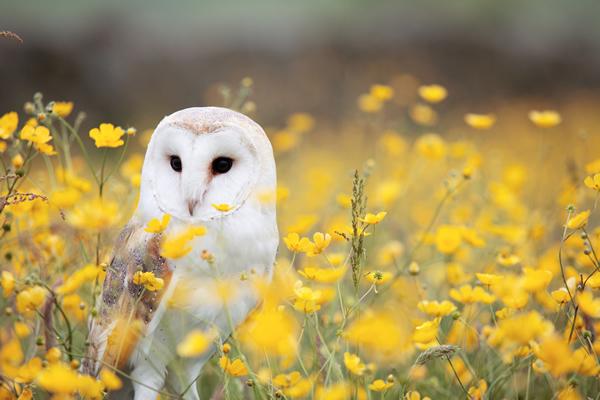 Owl in field