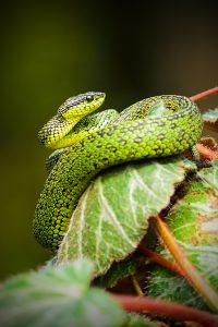our animals - snake